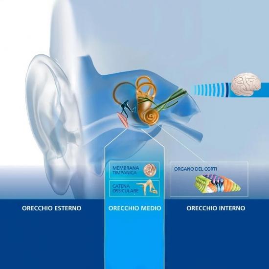 apparecchi-maico-torino-interno-orecchio